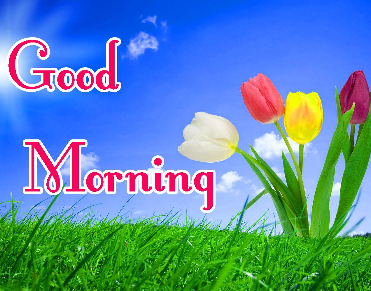 Beautiful Free good Morning Wallpaper Free