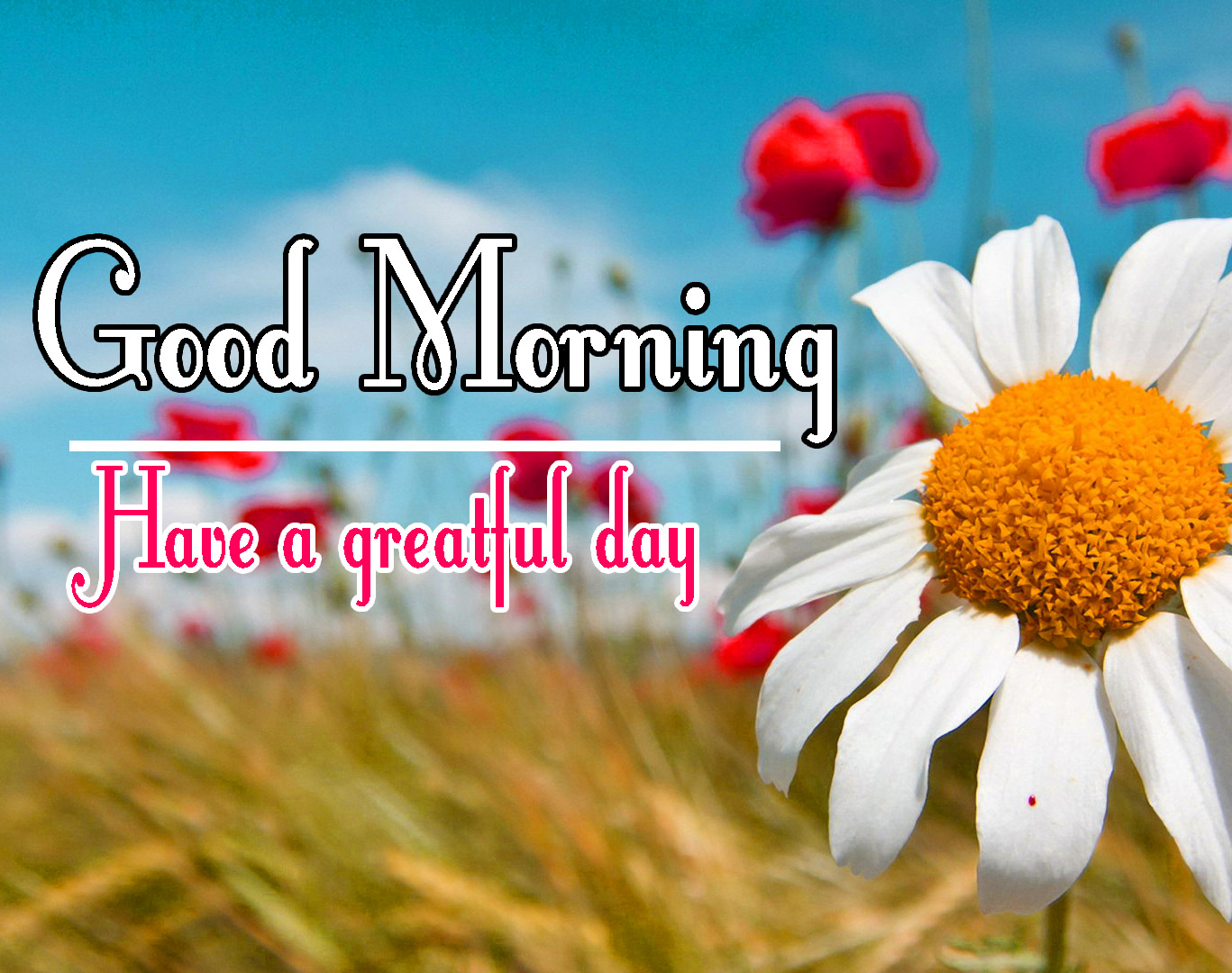 Beautiful Free good Morning Pics With Flower