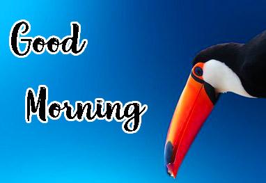Beautiful Free good Morning Pics for Whatsapp