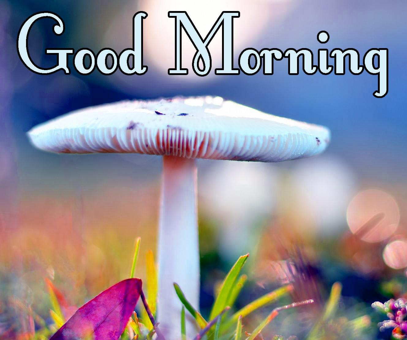 Beautiful Free good Morning Wallpaper