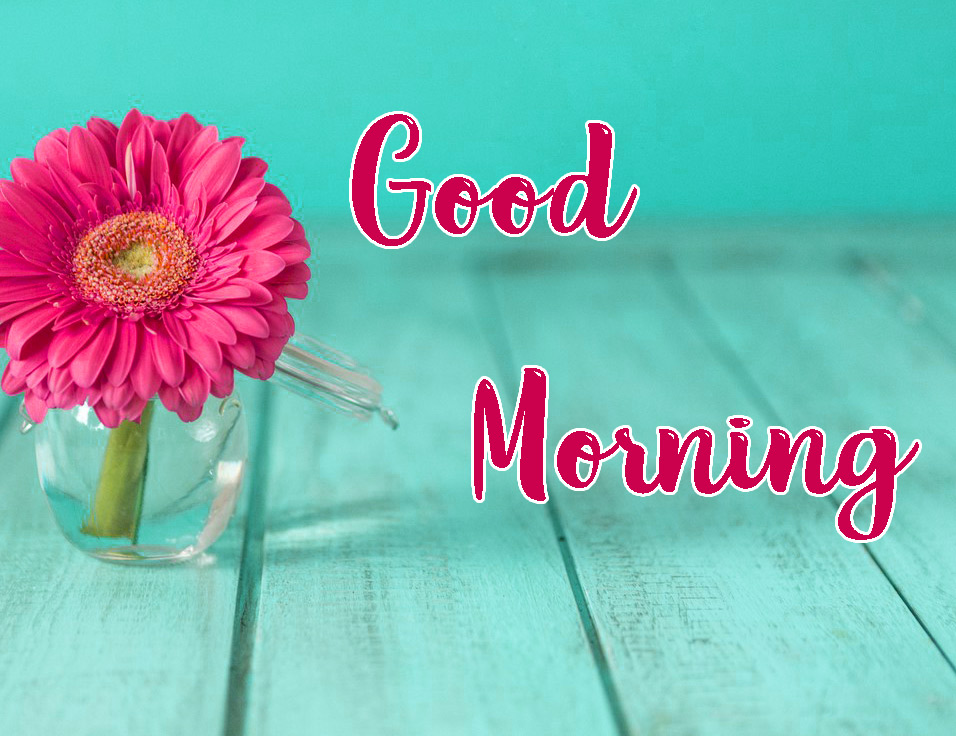 Flower HD Good Morning Images Download