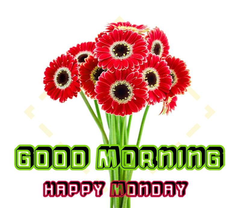 Monday Good Morning Images Pics HD Download for Whatsapp / Facebook