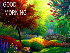 Nature Good Morning Images pics pictures free hd
