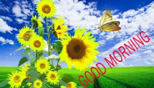 Nature Good Morning Images wallpaper free download