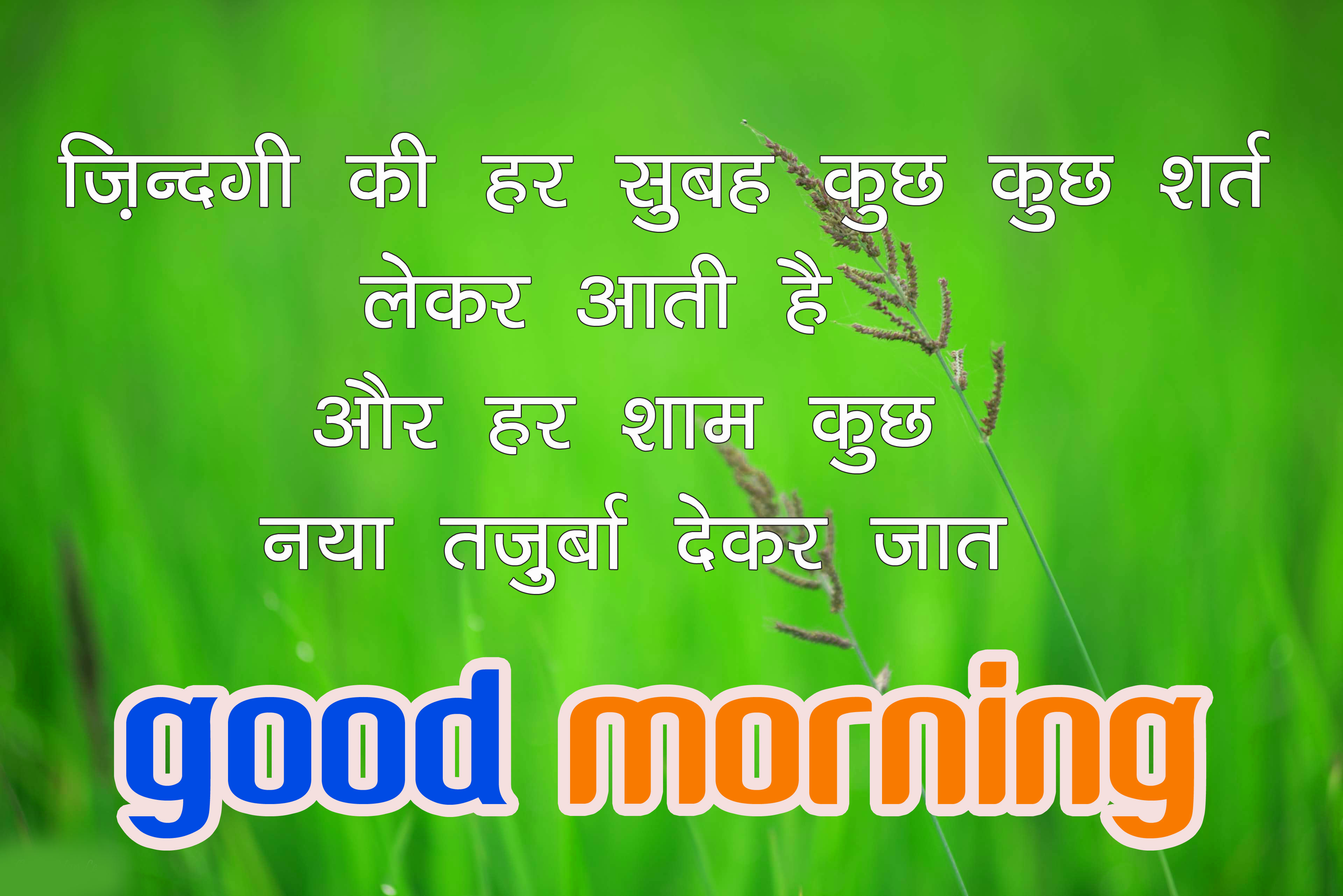 Good Morning Image with Nature Photo With Hindi Quotes