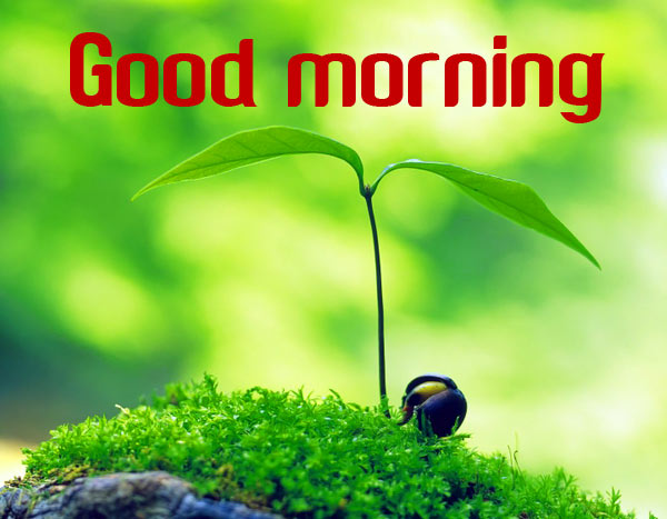Good Morning Image with Nature Pics Wallpaper