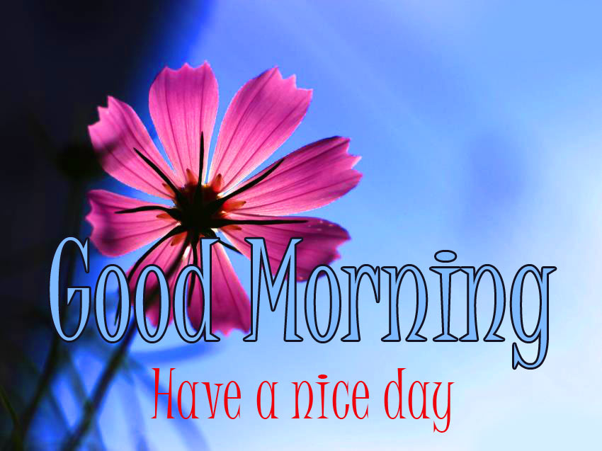 Good Morning Image with Nature Pics Wallpaper Photo