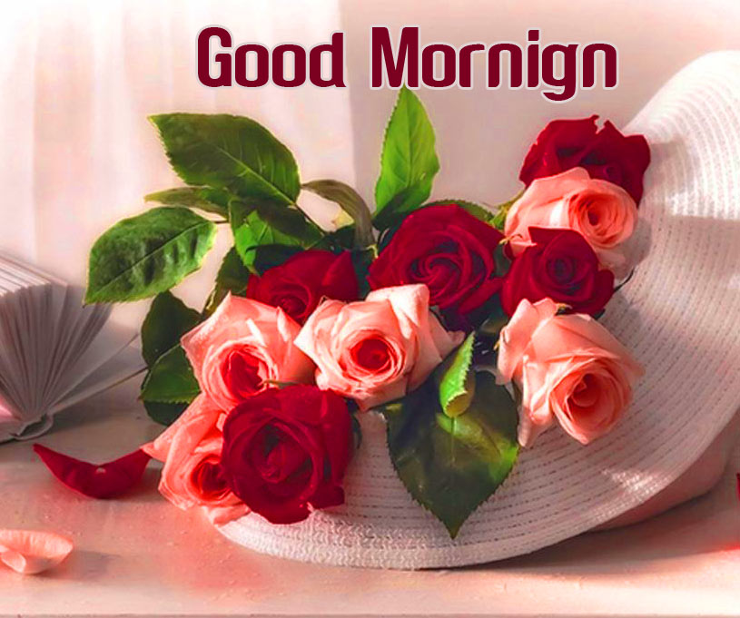 Flower Good morning Images Pics Pictures HD