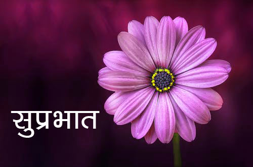 Flower Good morning  Images Pics Download