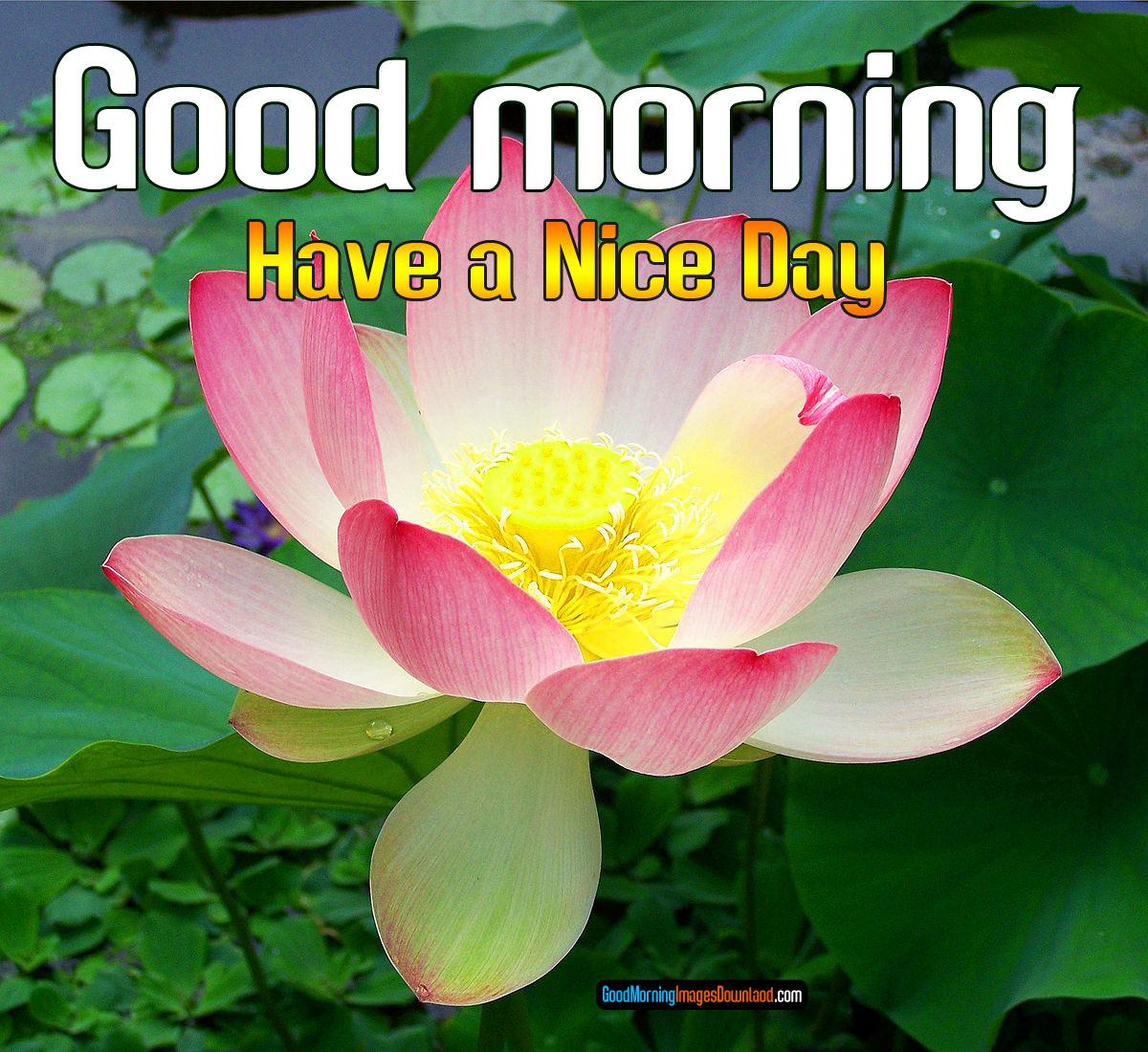 Flower Good morning Images Photo Pics Wallpaper HD