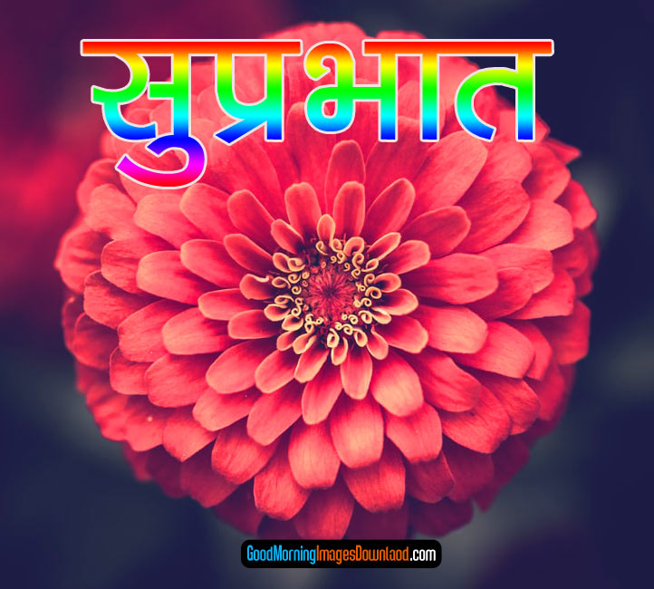 Flower Suprabhat Images Download