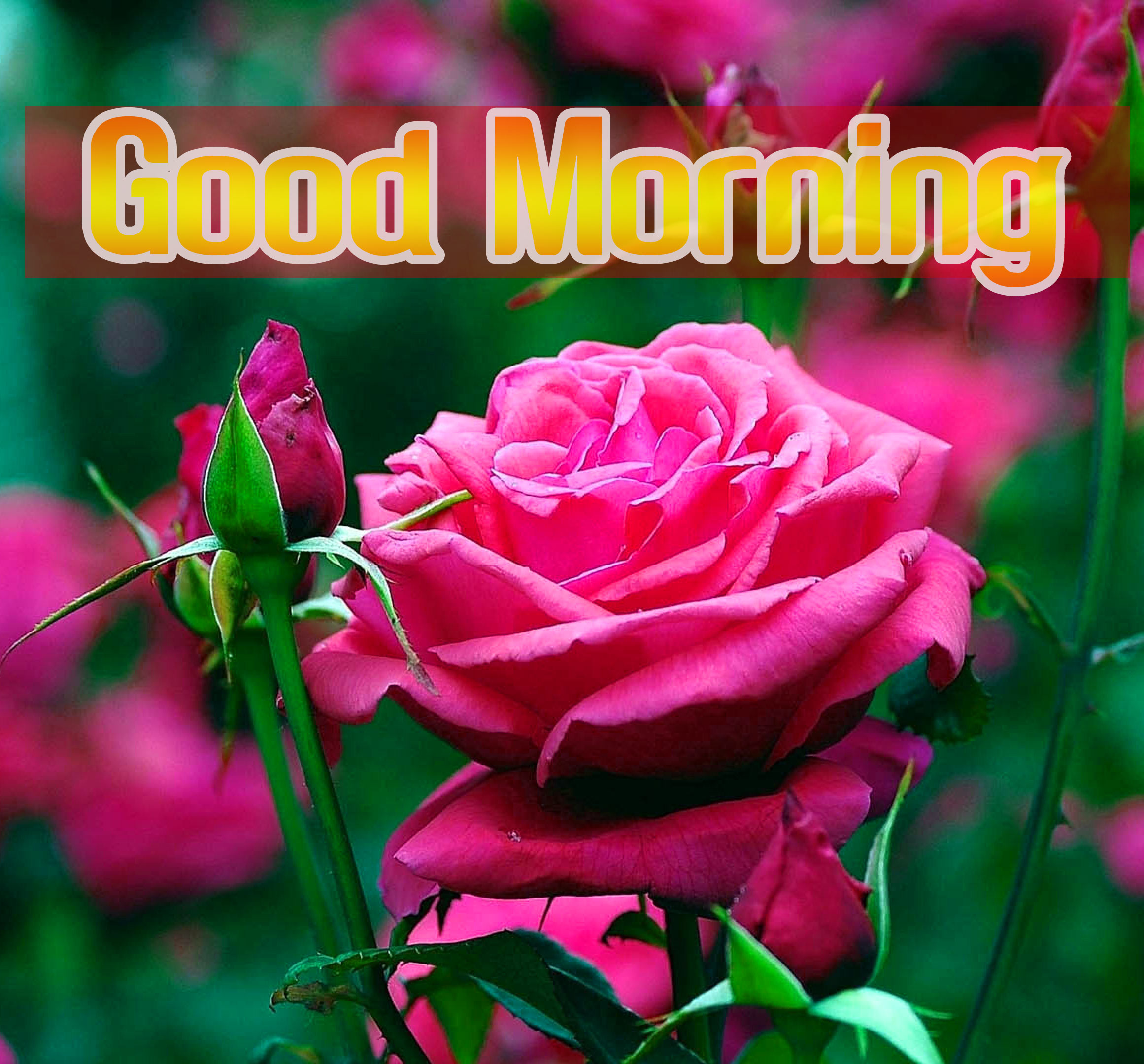 Flower Good morning Images Pics Free For Facebook