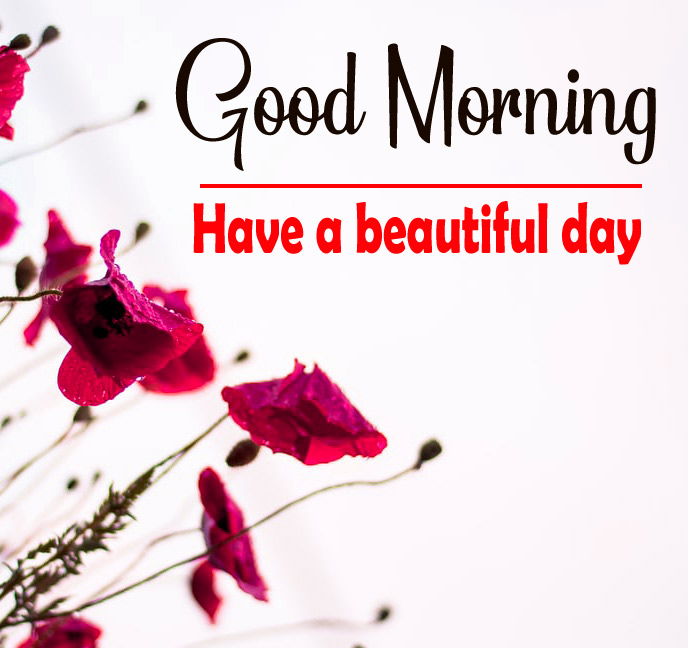 Flowers Love Good Morning Images Download