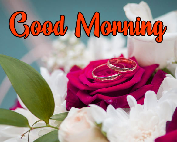 Flowers Love Good Morning Photo Free Download