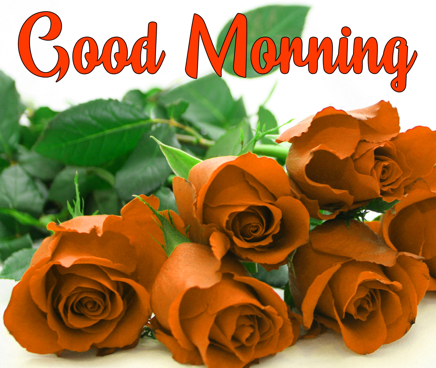 Flowers Love Good Morning Pics for Whatsapp