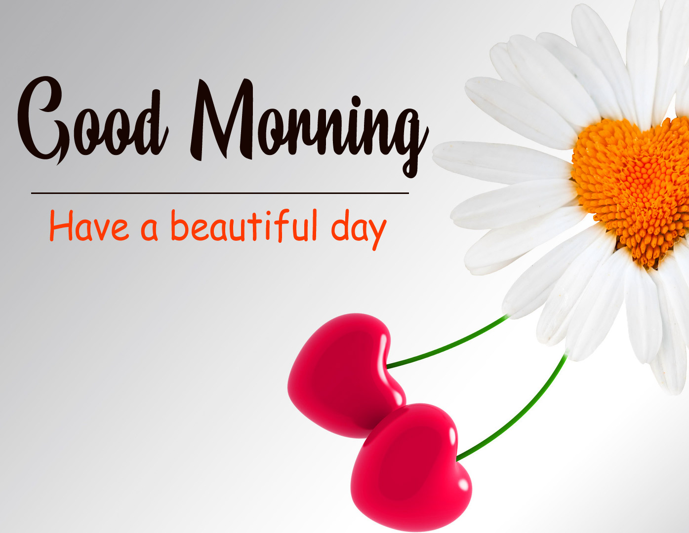 Flowers Love Good Morning Wallpaper Free