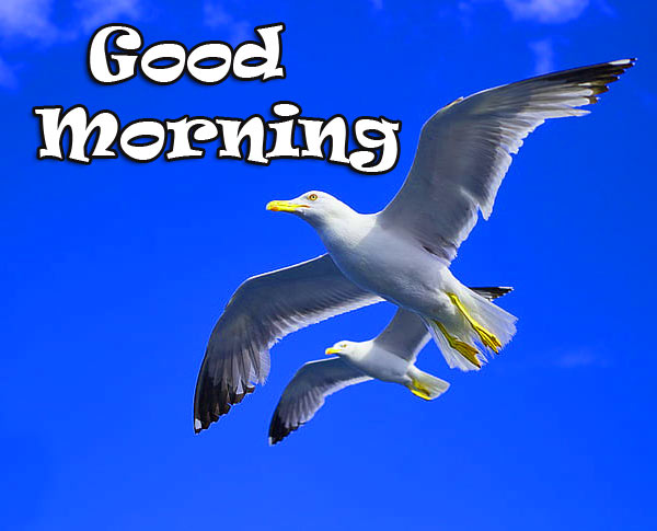 Special Good Morning Images Pics Wallpaper