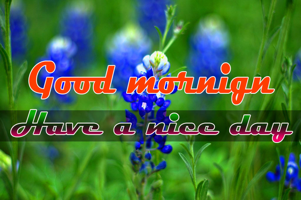 Special Good Morning Images Pics Download