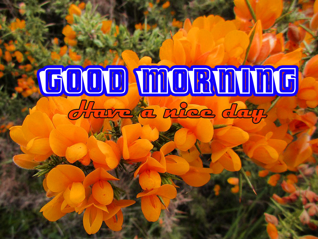 Special Good Morning Images Wallpaper Download