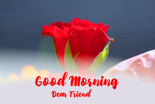 Friend Good Morning Images Wallpaper With Red Rose