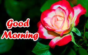 Friend Good Morning Images Pics Download for Facebook