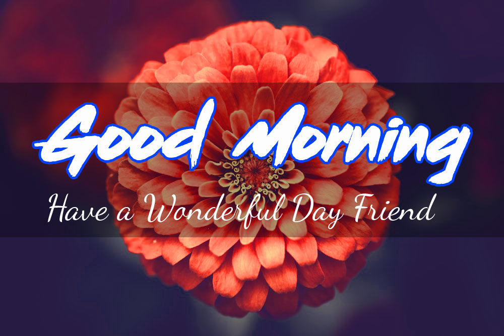 Friend Good Morning Images Pics Wallpaper HD