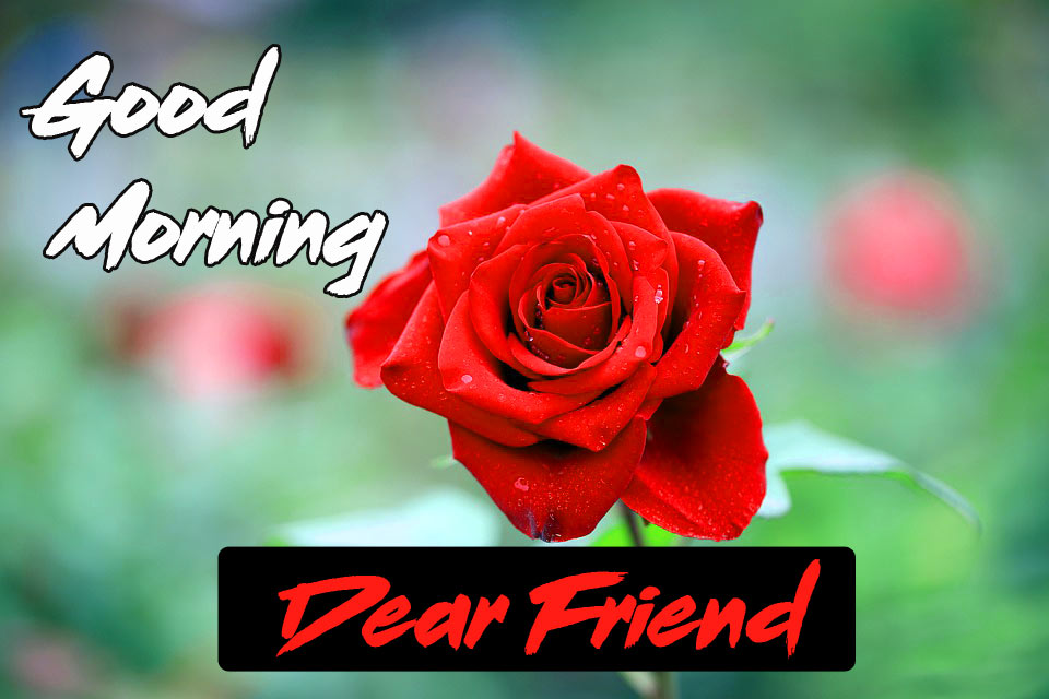 Friend Good Morning Images Pics Free