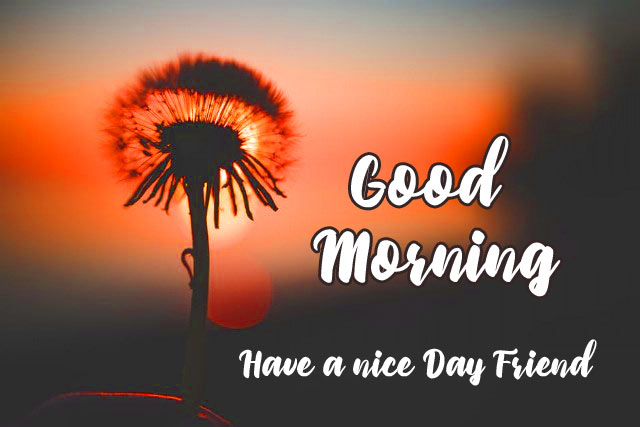 Friend Good Morning Images  Wallpaper for Facebook