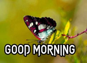 Good Morning Images pictures download