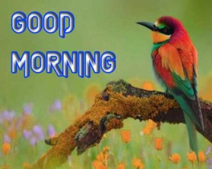 Good Morning Images pictures photo free hd