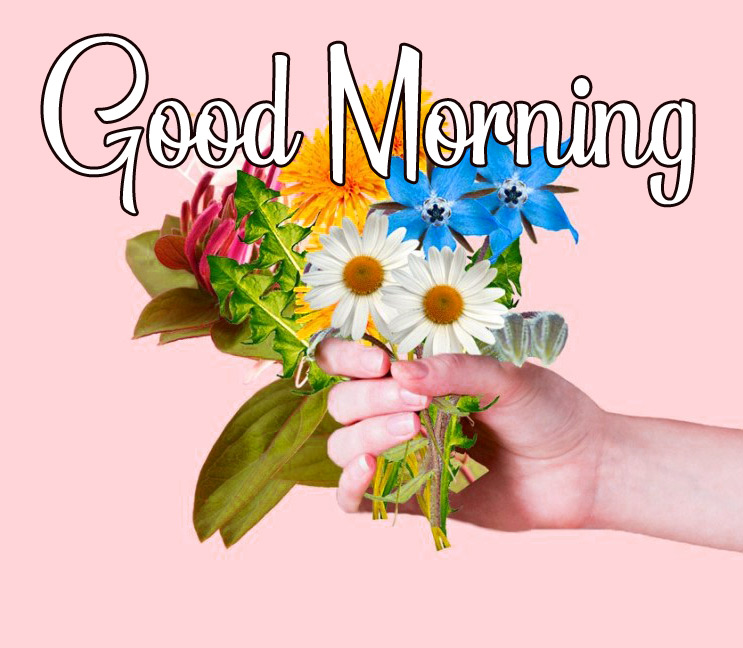 Flower HD good morning images Pics