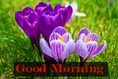 good morning photo 8