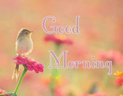 good morning pics hd 18