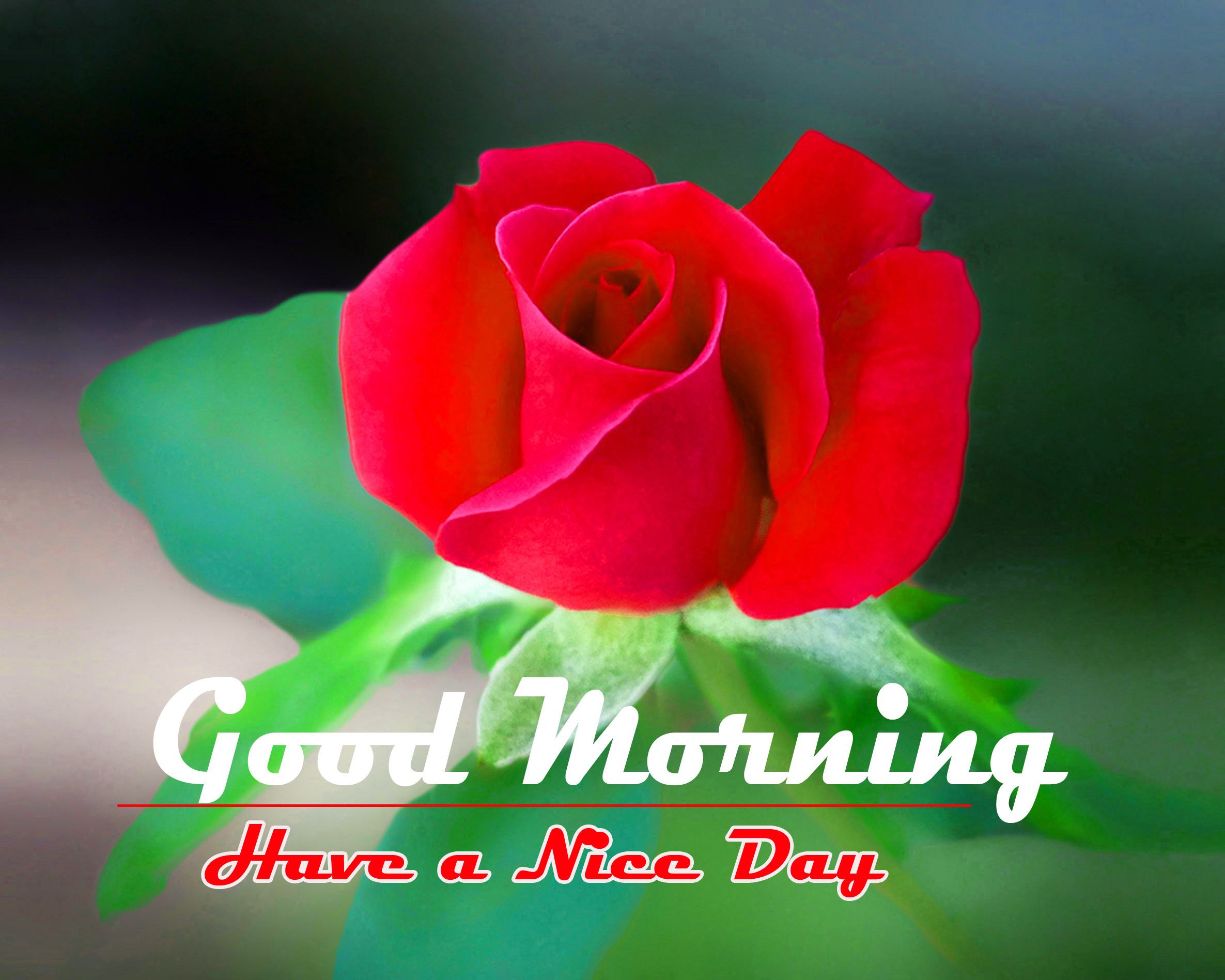 Goodmorning 560+ gud morning photo Pictures Download