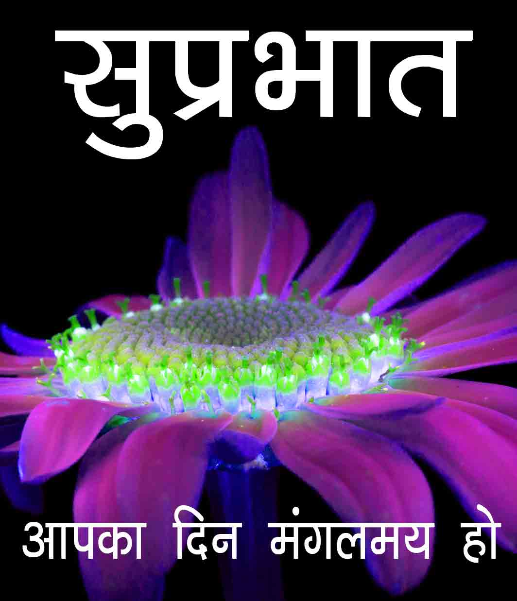 Suprabhat Images Pictures Free With Flower