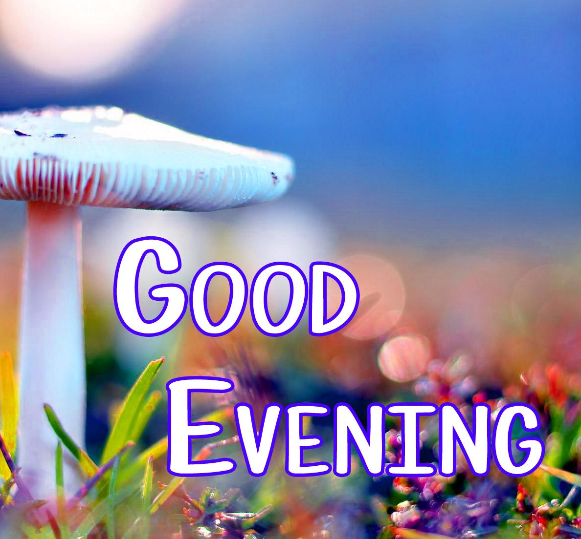 Beautiful Good Evening Images 17