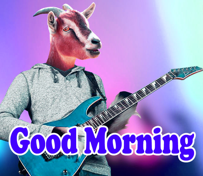 Funny Good Morning Wishes Wallpaper
