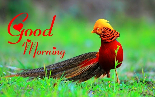 Good Morning Images Download 11