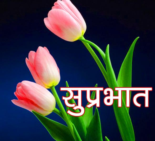flower good morning images Free Download