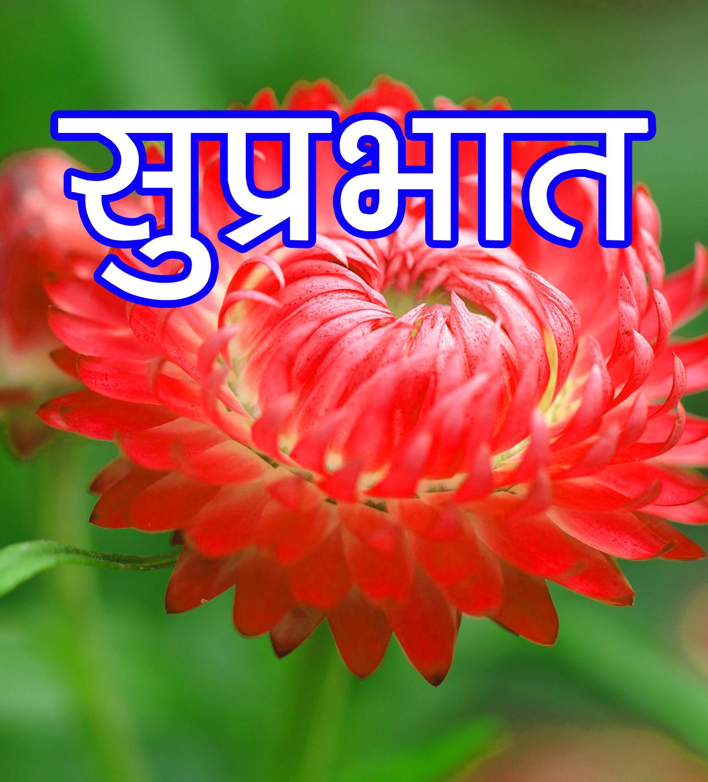 flower good morning images Wallpaper Free