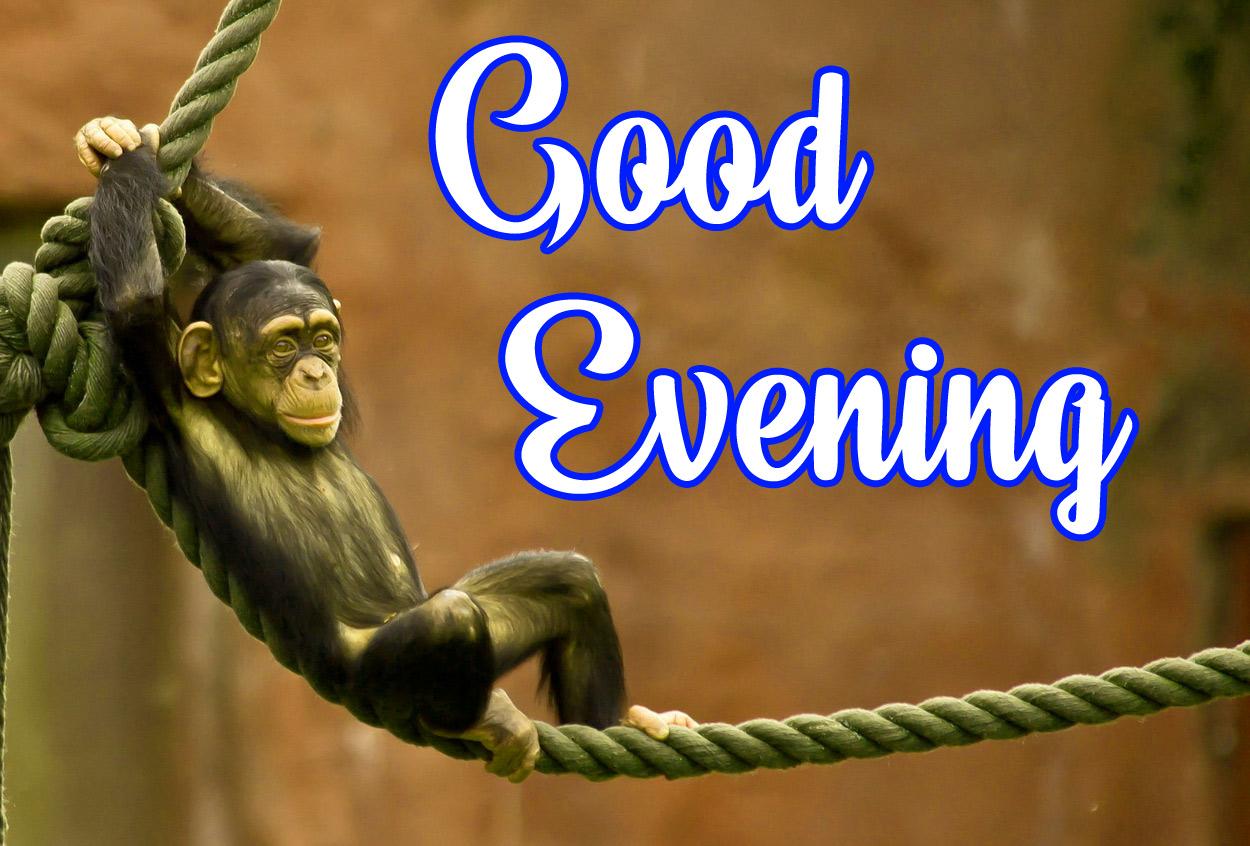 funny good evening Pics Free Download