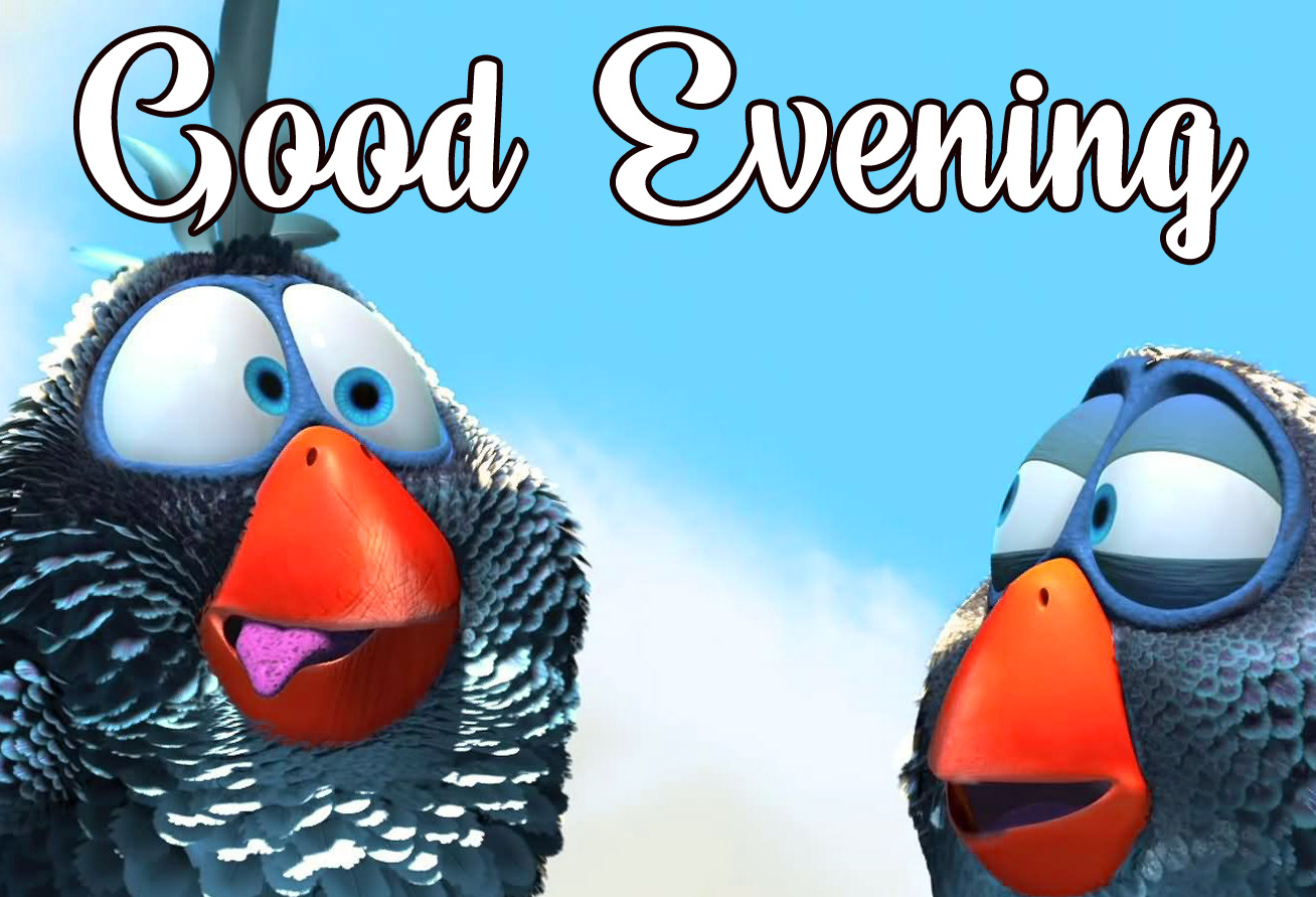 funny good evening Photo Free Download