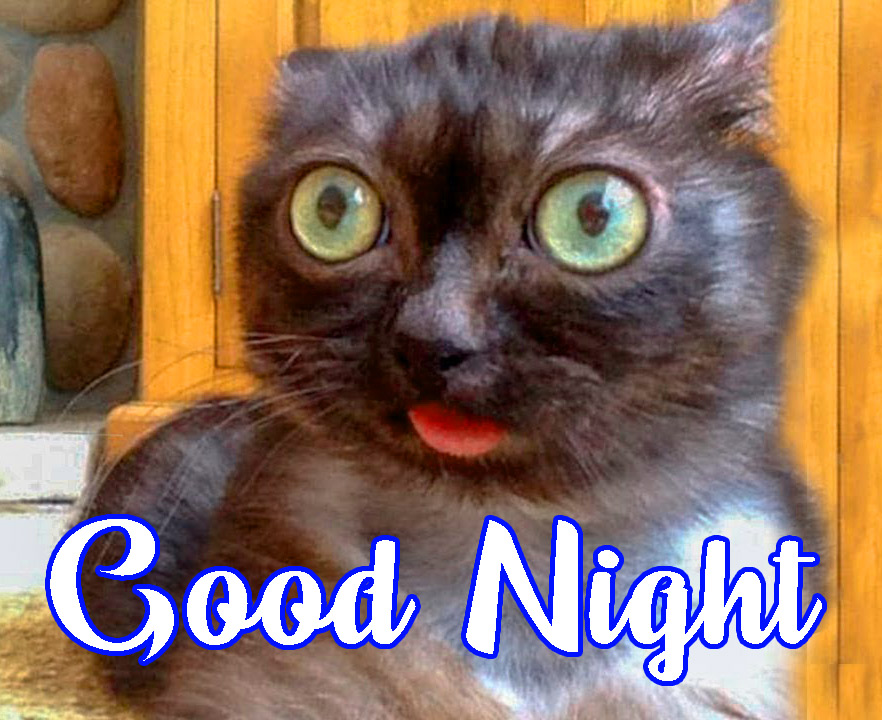 Funny Good Night Wallpaper Pics Download