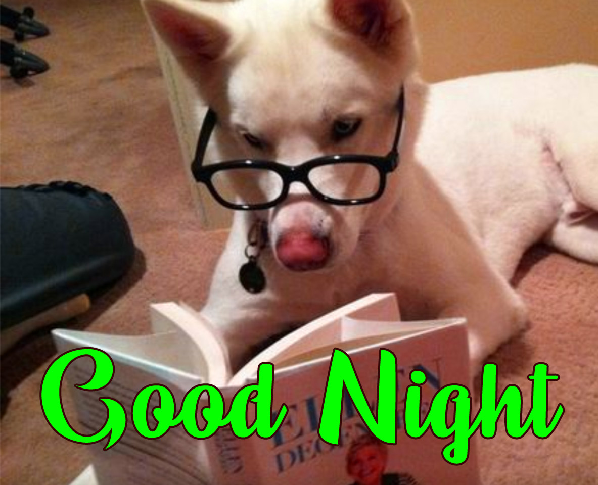 Funny Good Night Photo HD Download