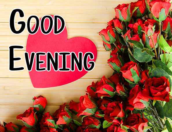 good evening rose Images 12