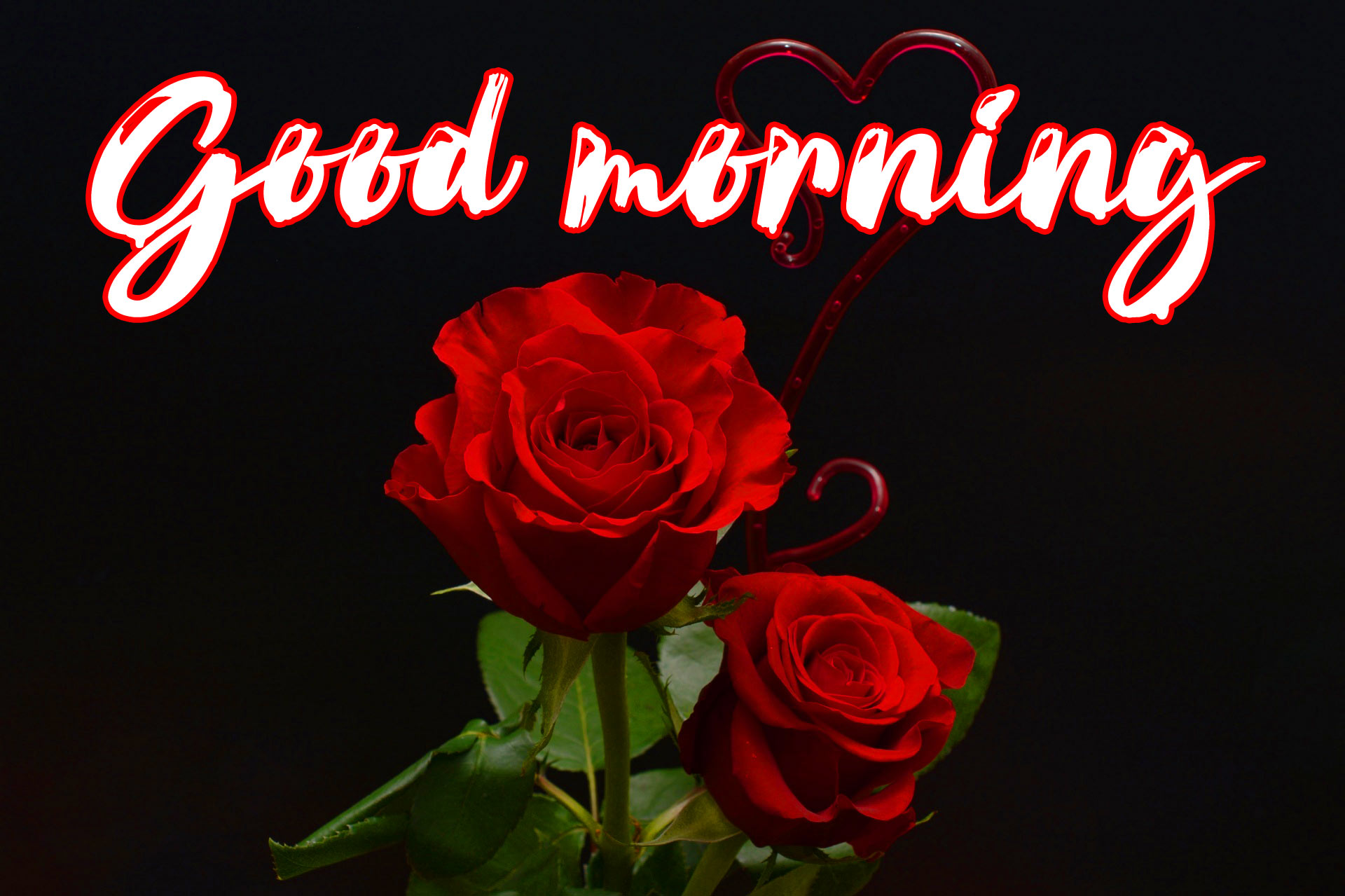 Good Morning Images For Girlfriend Wallpaper With Red Rose
