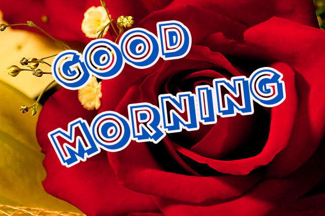 Good Morning Images For Girlfriend Pics With Flower
