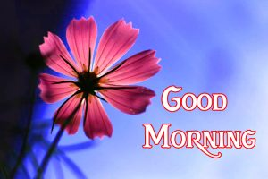 171+ Good Morning Images Photo Wallpaper For Her Download
