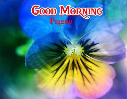 good morning photo 4 1