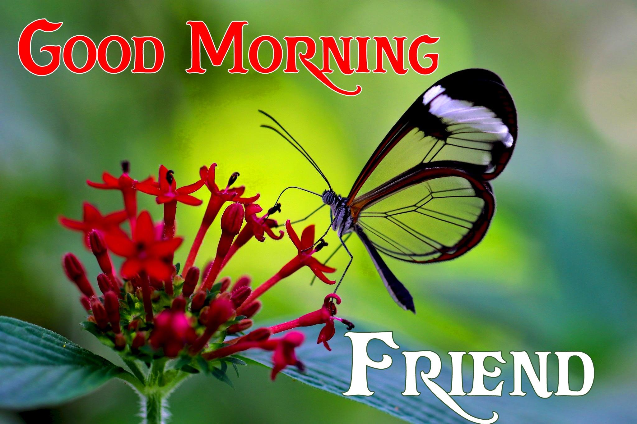 good morning photo 7 1